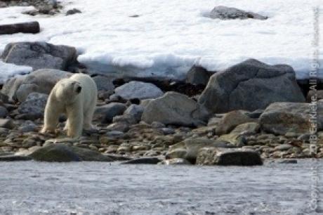 Stamp: Spitsbergen – IJsbeer