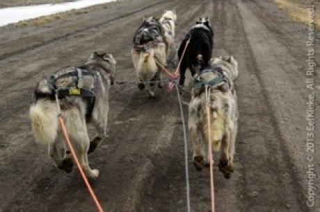 Stamp: Spitsbergen – Hondenslee