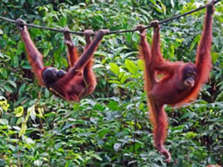Stamp: Nieuw fotoalbum Borneo in Gallery