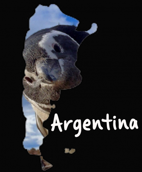 Time to work as Tourleader …. ARGENTINA