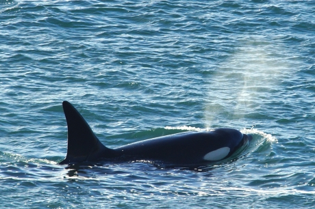 Travelsoap: Orca Camp