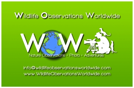 Buisness card @Wildlife Observations Worldwide