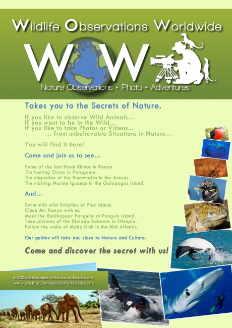 Promotion Flyer Shows @Wildlife Observations Worldwide