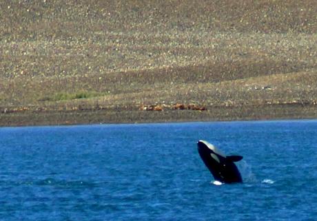 Stamp: Argentina – Orca Camp