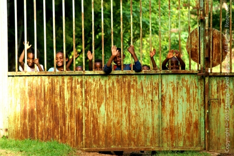 Stamp: Nieuw fotoalbum Ethiopië in Gallery